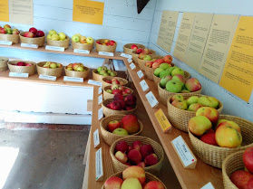 Exhibition of different types of apples