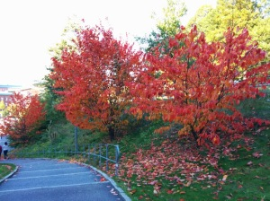 Signs of Autumn with trees being engulfed in red